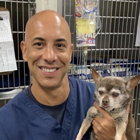 صور: طبيب بيطري يعالج حيوانات المشردين بولاية كاليفورنيا