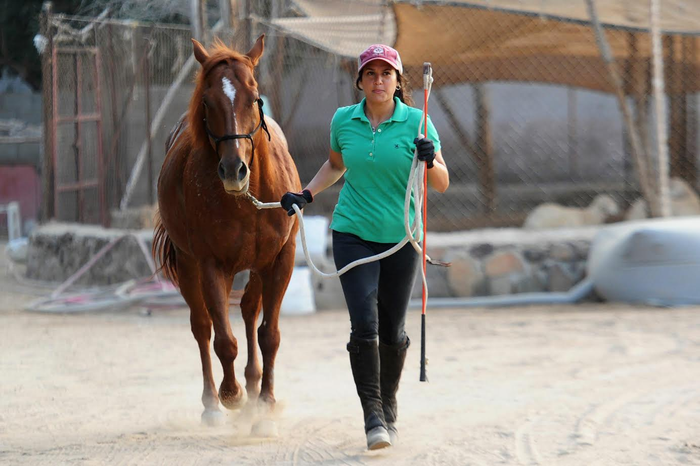 Five Fundamentals of Horse Training Part 1 of 2 with ... |Horse Training