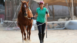 Female Saudi Horse Trainer Sees Hope for Women