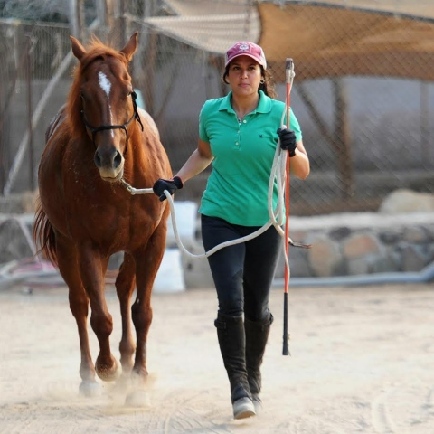 Photo: Female Saudi Horse Trainer Sees Hope for Women