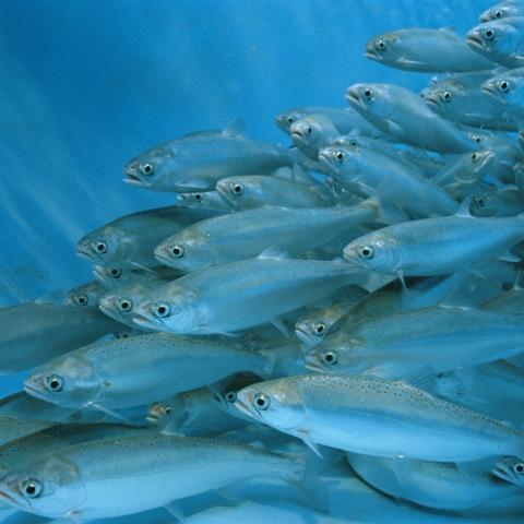 """صور: """"Fish farm"""" مزرعة الأسماك في دبي"""