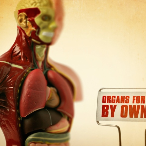 Photo: Organs for Sale
