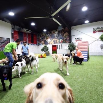 Photo: Dubai's first dog water park
