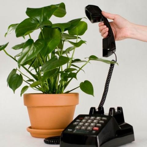 ${rs.image.photo} النباتات كائنات اجتماعية يمكنها التواصل فيما بينها