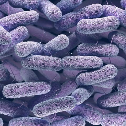صور: البكتيريا والفيروسات.. ما الفارق بينهما؟