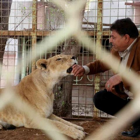 صور: الحياة في أحضان الأسود.. عراقي يربي أسوداً في منزله منذ 10 أعوام!
