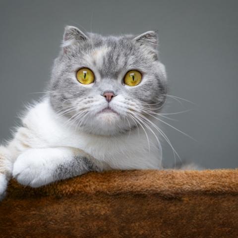 صور: حقائق إيجابية صادمة عن تربية القطط في المنزل تعرَف عليها!
