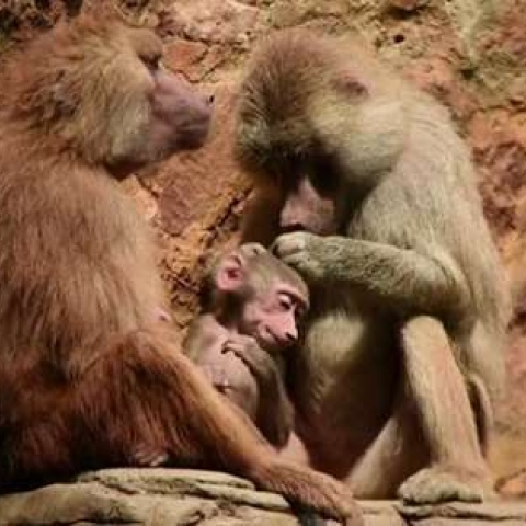 صور: حديقة كولومبية تهدئ حيواناتها على أنغام الموسيقى الكلاسيكية