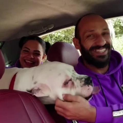 """صور: أليفكوم باكسي.. خدمة """"تاكسي"""" لنقل الحيوانات الأليفة في القاهرة"""
