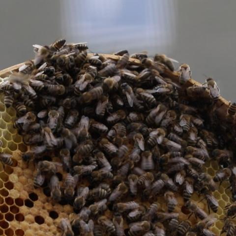 Photo: Un-bee-lievable