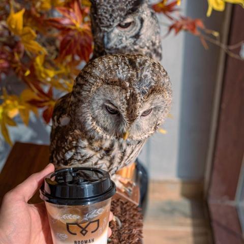 """صور: تناول قهوتك مع طيور البوم في مقهى """"بومه"""" في أبوظبي!"""