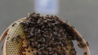 عرش العسل