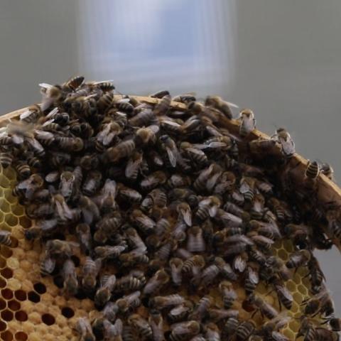 صور: عرش العسل
