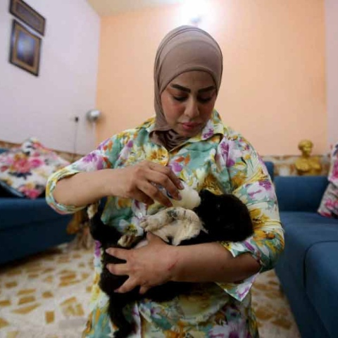 صور: زينب العبيدي.. مُدرسة تولّت مهمة إنقاذ الحيوانات الضالة بحيّها