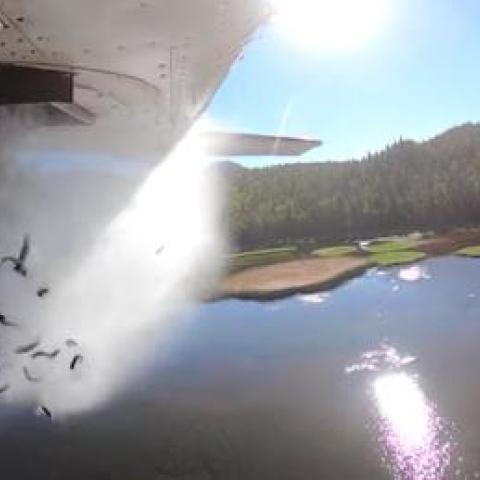 صور: تزويد بحيرة يوتا الأمريكية بالأسماك جواً حفاظاً على الحياة المائية