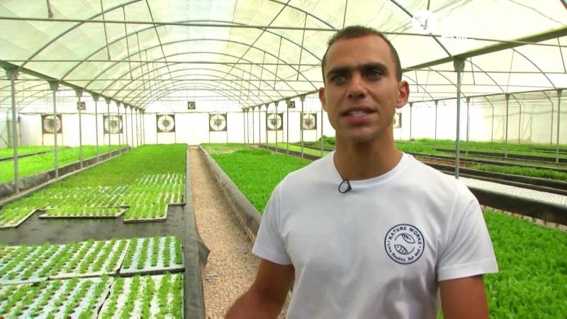 """صور: Natureworks.. مزرعة مستدامة بـ""""أم الدنيا"""" تستخدم مخلفات الأسماك لزراعة الخضروات"""