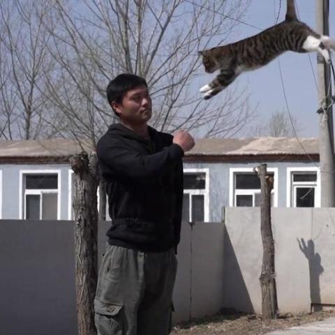 """صور: القطة العسكرية """"جانغبينغ"""" تصبح نجمة وسائل التواصل الاجتماعي في الصين لممارستها تدريبات القوات الخاصة!"""
